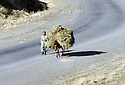 Irak 2000.Sur une route du Badinan.Iraq 2000.A man with his donkey on a road in Badinan