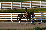 October 23, 2015:  Harmonize, trained by William Mott, and owned by Larkin Armstrong, is entered to run in the Breeder's Cup Juvenile Fillies Turf.  Candice Chavez/ESW/CSM