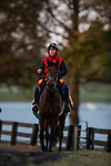 November 2, 2020: Audarya, trained by trainer James R. Fanshawe, exercises in preparation for the Breeders' Cup Filly & Mare Turf at Keeneland Racetrack in Lexington, Kentucky on November 2, 2020. Alex Evers/Eclipse Sportswire/Breeders Cup