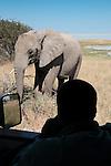 Man on safari in vehicle watching a nearby African elephant in Etosha National Park, Namibia. (This species is found in many African countries including South Africa, Botswana, Zambia, Zimbabwe, Namibia, Tanzania, Kenya, Rwanda, Uganda, Angola, Democratic Republic of Congo)