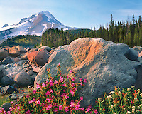 Mt. Hood from rock field and wildflowers along White River in Mt Hood National Forest Oregon