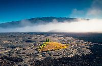An aerial view of a tucked-away, private nene goose sanctuary on Mauna Loa, Hawai'i Island.