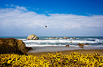 Face Rock, Bandon Beach State Park, is a point revered in the history of both European and Native American peoples of the U.S. Oregon Coast.  Rugged, scenic, Oregon Coast.