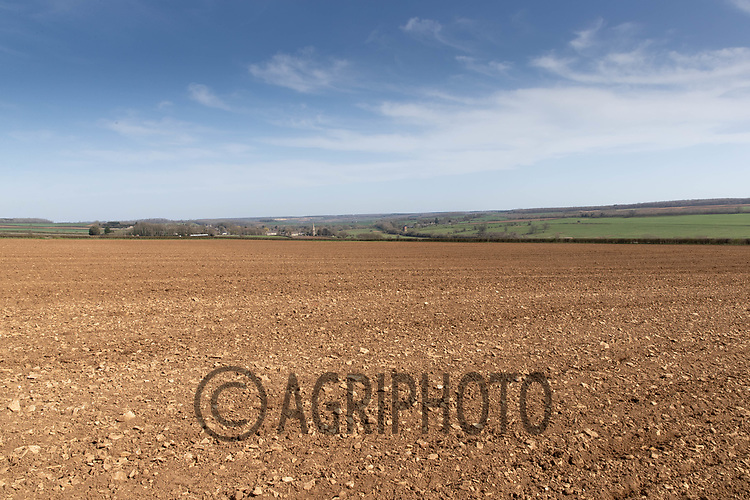 30-3--2021 Field worked down ready for drilling sugar beet<br /> ©Tim Scrivener Photographer 07850 303986<br />      ....Covering Agriculture In The UK....