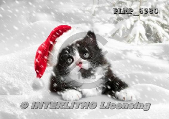 Marek, CHRISTMAS ANIMALS, WEIHNACHTEN TIERE, NAVIDAD ANIMALES, photos+++++,PLMP6980,#XA# cat  santas cap,