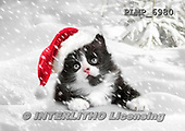 Marek, CHRISTMAS ANIMALS, WEIHNACHTEN TIERE, NAVIDAD ANIMALES, photos+++++,PLMP6980,#XA# cat  santas cap,