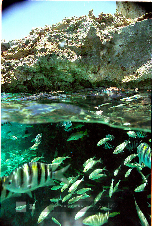 The Bahamas, Exuma, are the perfect place to snorkel, sail your own boat, camp, fish and do anything else your heart desires. Here an underwater photograph of some yellow stripe tropical fishes.