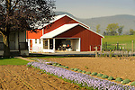 Nippenose Valley. Levi Stolfus Farm. Spring garden and buggy barn.