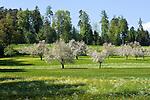 CHE, Schweiz, Kanton Thurgau, bei Steckborn, Blumenwiese und Apfelbluete | CHE, Switzerland, Canton Thurgau, near Steckborn, apple blossom