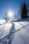 Oesterreich, Salzburger Land, Dienten: Fußspuren im Tiefschnee   Austria, Salzburger Land, Dienten: footprints in deep snow