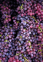 A pile of seedless table grapes colored purple reddish purple and mauve with green stems.  New Mexico United States