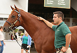 11 September 2010.  Hip #79  Distorted Humor - Oneofacat colt, consigned by Lane's End.