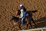 November 5, 2020: Texas Wedge, trained by trainer Peter Miller, exercises in preparation for the Breeders' Cup Turf Sprint at Keeneland Racetrack in Lexington, Kentucky on November 5, 2020. John Voorhees/Eclipse Sportswire/Breeders Cup/CSM