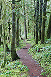 The McKenzie River trail, well known for mountain biking and hiking, runs alongside the famed McKenzie river in eastern Linn County, Oregon.