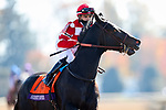 November 7, 2020 : Seregenti Empress, ridden by Thomas M. Amoss, get ready for the Filly & Mare Sprint on Breeders' Cup Championship Saturday at Keeneland Race Course in Lexington, Kentucky on November 7, 2020. Wendy Wooley/Breeders' Cup/Eclipse Sportswire/CSM