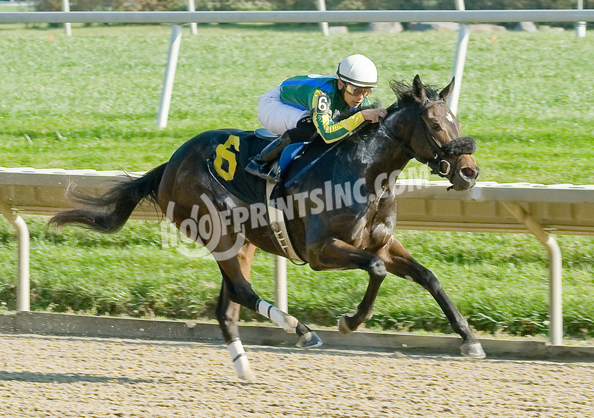 Terralba winning at Delaware Park on 11/2/11