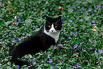 Spooky the cat sitting in  the flowers