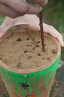 Kind, Junge baut eine Insekten-Nisthilfe für Wildbienen und Widwespen, Blumentopf wird mit Lehm gefüllt, mit einem Stöckchen werden Löcher als Nistmöglichkeit in den Lehm gebohrt, hohle Pflanzenstängel werden in den Lehm gesteckt, Nisthilfe für Wildbienen