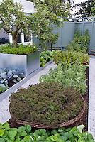 Apple Tree, raised beds, strawberries, vegetables growing in fenced yard