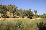 Nahal Gerar springs in the Northern Negev