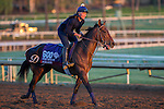 OCT 29 2014:Ageless, trained by Arnaud Delacour, exercises in preparation for the Breeders' Cup Turf Sprint at Santa Anita Race Course in Arcadia, California on October 29, 2014. Kazushi Ishida/ESW/CSM