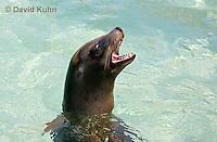 0406-1006  California Sea Lion Barking While Swimming, Zalophus californianus  © David Kuhn/Dwight Kuhn Photography.