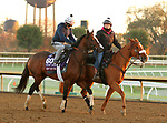 Front Run The Fed, trained by trainer Chad C. Brown, exercises in preparation for the Breeders' Cup Turf Sprint at Keeneland Racetrack in Lexington, Kentucky on October 31, 2020.
