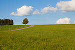 Europa, DEU, Deutschland, Bayern, Allgaeu, Landkreis Ostallgaeu, Alpenvorland, Typische Landschaft, Spaetsommer, Wolkenstimmung, Cumuluswolken, Natur, Umwelt, Landschaft, Jahreszeiten, Stimmungen, Landschaftsfotografie, Landschaften, Landschaftsphoto, Landschaftsphotographie, Wetter, Wetterelemente, Wetterlage, Wetterkunde, Witterung, Witterungsbedingungen, Wettererscheinungen, Meteorologie, Wettervorhersage, <br /> <br /> [Fuer die Nutzung gelten die jeweils gueltigen Allgemeinen Liefer-und Geschaeftsbedingungen. Nutzung nur gegen Verwendungsmeldung und Nachweis. Download der AGB unter http://www.image-box.com oder werden auf Anfrage zugesendet. Freigabe ist vorher erforderlich. Jede Nutzung des Fotos ist honorarpflichtig gemaess derzeit gueltiger MFM Liste - Kontakt, Uwe Schmid-Fotografie, Duisburg, Tel. (+49).2065.677997, ..archiv@image-box.com, www.image-box.com]