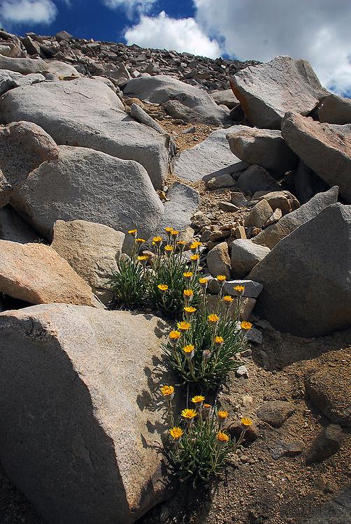Wildflowers behind Keeler Needle