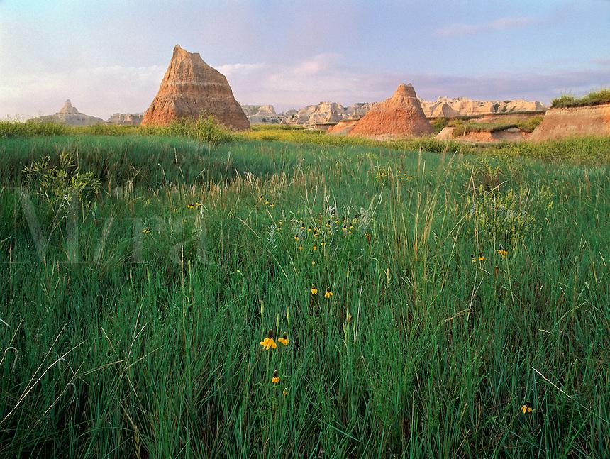 Coneflowers and pinnacles, Badlands National Park, South Dakota