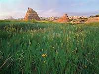 Coneflowers and pinnacles, Badlands National Park, South Dakota