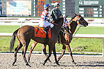 NEW ORLEANS, LA - FEBRUARY 25: Gris Gris #7, ridden by James Graham.  Rachel Alexandra Stakes, on Risen Star Stakes Day at Fair Grounds Race Course on February 25, 2017 in New Orleans, Louisiana. (Photo by Jarrod Monaret/Eclipse Sportswire/Getty Images)