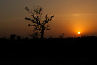 Sunset over the Rajasthan desert in India