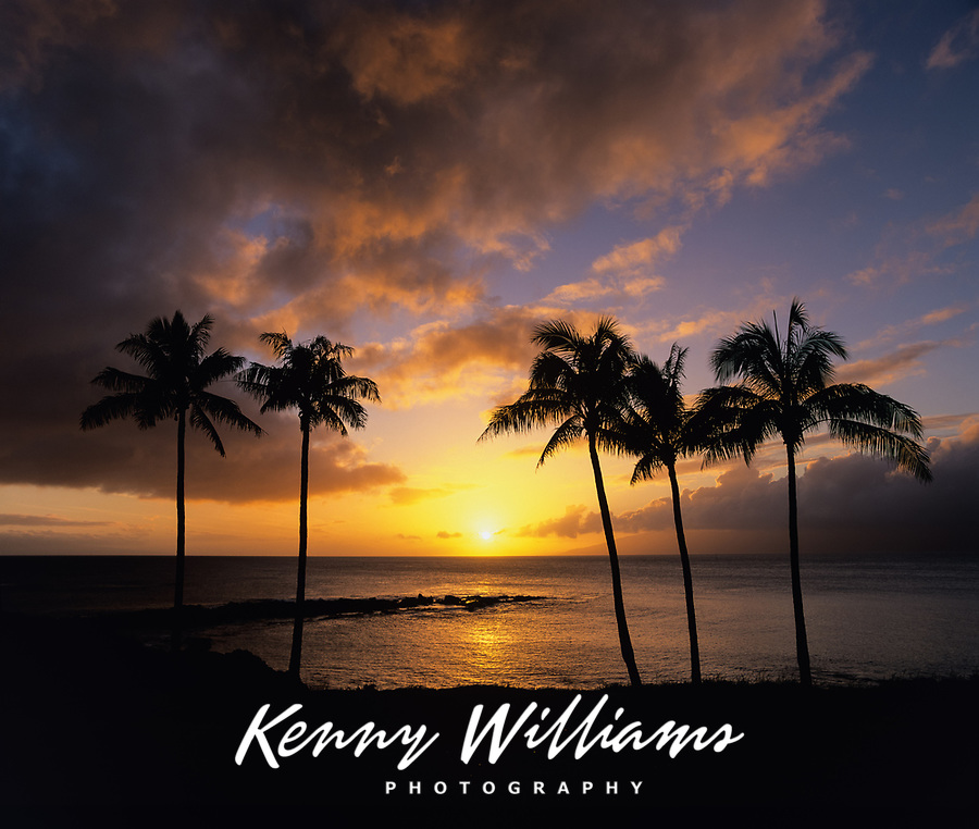 Palm Trees at Sunset, Montage Kapalua Bay Hotel and Resort, Maui, Hawaii, USA.