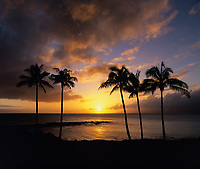 Palm Trees at Sunset, Montage Kapalua Bay Hotel and Resort, Maui, Hawaii, USA.