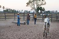 foal roping in Pantanal ranch