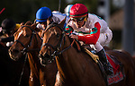HALLANDALE FL - FEBRUARY 27: Converge #11, with Javier Castellano aboard wins the Palm Beach Stakes at Gulfstream Park on February 27, 2016 in Hallandale, Florida.(Photo by Alex Evers/Eclipse Sportswire/Getty Images)