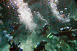 Divers explore Saturday, July 15, 2006, during a basic open water diving class with Spruce Creek Scuba at Alexander Spring in Altoona. WIth the springs and the ocean nearby divers have many opportunities to try their hand at free-diving and SCUBA diving. According to the Florida Department of Environmental Protection website at http://www.dep.state.fl.us/ says Alexander Spring issues vertically from a conical depression and has a large spring pool with a depth of 25 ft. There is a large boil on the pool surface over the vent and native aquatic grasses are plentiful. Alexander Spring Run flows east trending approximately 8 river miles until reaching the St. Johns River. (Daytona Beach News-Journal, Chad Pilster)