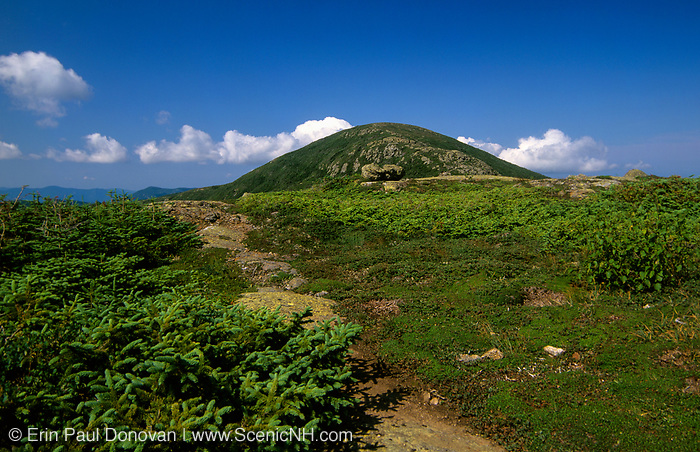 Appalachian Trail - Hiking in the scenic landscape of the Southern Presidential Range in the White Mountain National Forest, New Hampshire. Mount Eisenhower is in view.