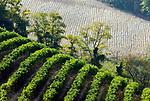 Italien, Piemont, Weinanbau bei Acqui Terme - Detail, Struktur | Italy, Piedmont, wine growing near Acqui Terme (detail, structure)