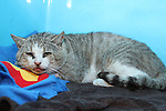 Poisoned Cat at Westgate Vetinary Clinic