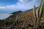 Salar de Uyuni Cette étendue de sel, vestige d'un lac d'eau de mer asséché est situé à 3 700 mètres d'altitude. Avec une superficie de 12 500 km²,  c'est le plus vaste désert de sel du monde. Bolivie..Salar de Uyuni is the world's largest salt flat at 10,582 square kilometers. Bolivia