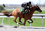 01 April 2010.  Hip #181 Giant's Causeway - Dixie Melody filly.