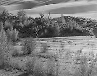 """""""Medano Creek"""" <br /> Great Sand Dunes National Park, Colorado<br /> <br /> This photo was recorded on the Sand Pit trail in The Great Sand Dunes National Park and Preserve in Colorado. The black and white photograph shows the beautifully full light which often bathes the dune area."""