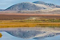 Kigluaik mountains reflect in wetlands pond near Solomon along the Council highway on the Seward Peninsula, western Arctic, Alaska.