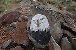 An eagle painted on a rock on Mount Sentinel in Missoula, Montana