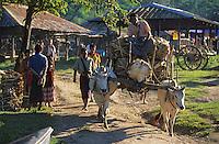 Asie/Birmanie/Myanmar/Plateau Shan/Ywathit: Lac Inle - Attelage de boeufs sur le marché de Mang Thawk