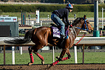 ARCADIA, CA  OCTOBER 30: Breeders' Cup Dirt Mile entrant Ambassadorial, trained by Jane Chapple-Hyam, exercises in preparation for the Breeders' Cup World Championships at Santa Anita Park in Arcadia, California on October 30, 2019. (Photo by Casey Phillips/Eclipse Sportswire/CSM)