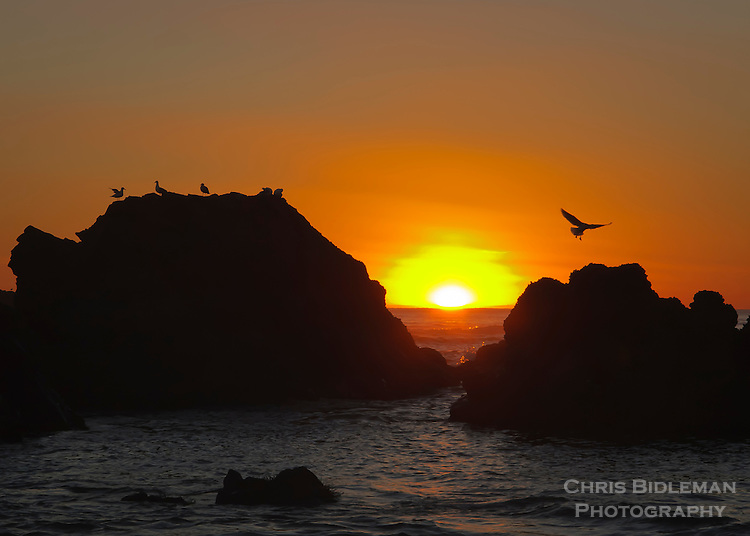 Sunset through the rocks at Cannon Beach, OR with seagulls on the rocks and flying in the air with sun just dipping below horizon of ocean.