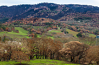 Fire Recovery Sonoma County